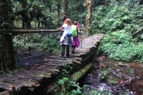 Hiking in bwindi