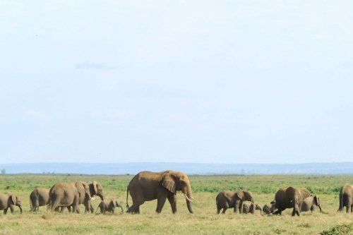 .vc_custom_1581845302891 { padding-top: 120px !important; background-image: url(https://foreverafricasafari.com/wp-content/uploads/2020/02/tanzania-serengeti-savanna-africa-safari-drive.jpg?id=582) !important; background-position: center bottom !important;