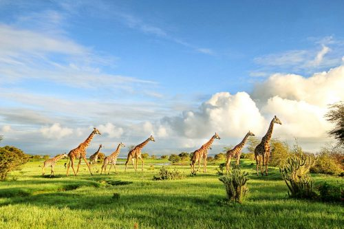 African Savanna Experience Safari (Kenya, Tanzania & Uganda)