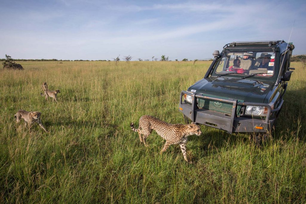 3 Day Africa Safari in Masai Mara