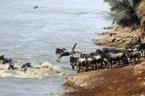 10 Day Africa Safari in Kenya & Tanzania