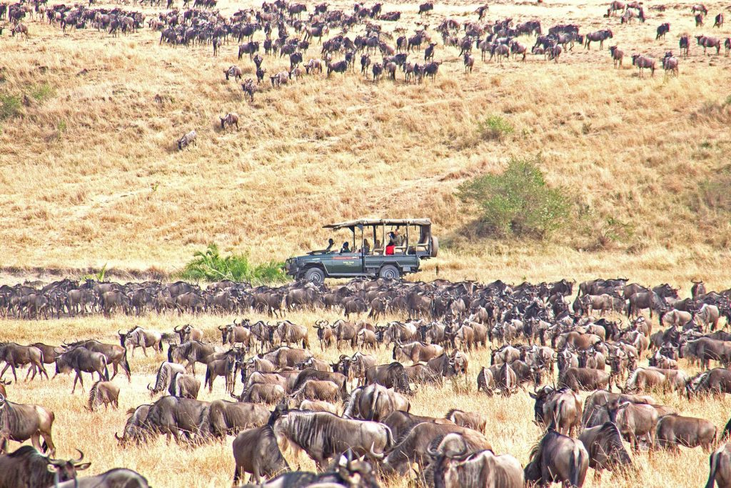 Serengeti Tanzania Safari Destination