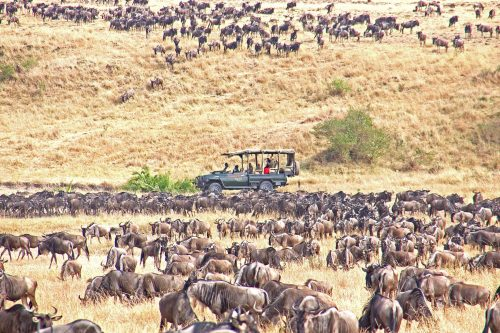 East Africa safaris in the Serengeti National Park