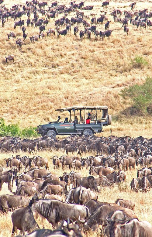East Africa safaris in the Serengeti National Park