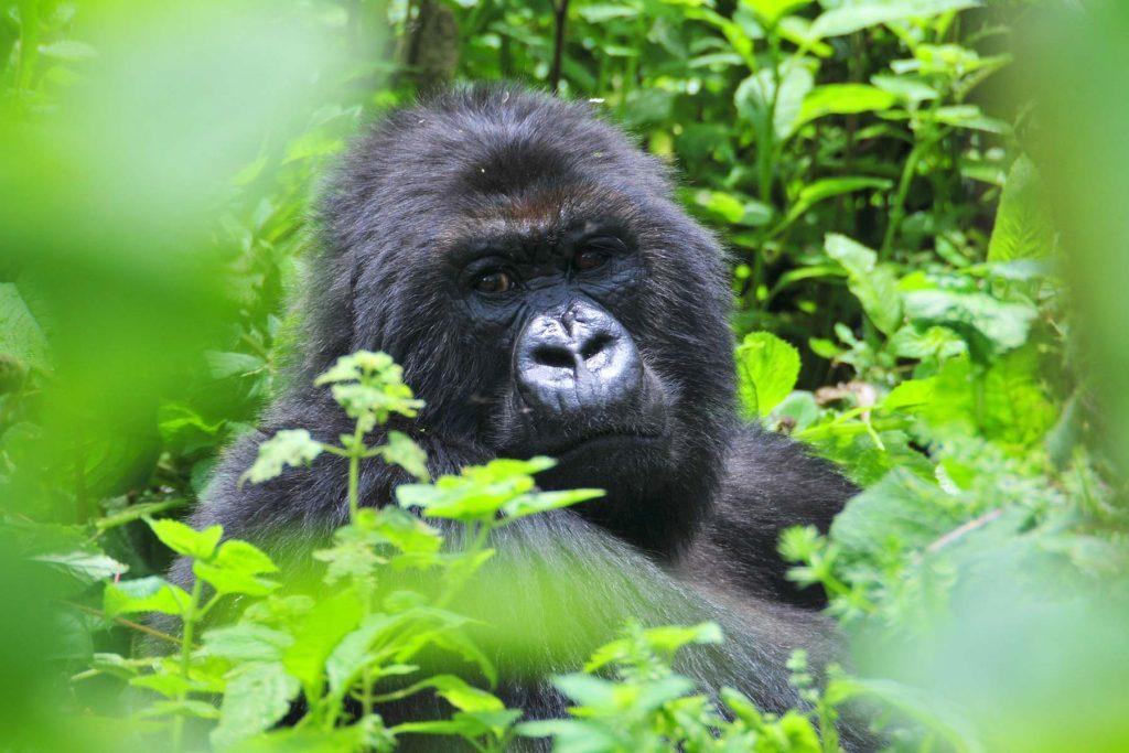 Rwanda Safari Destination