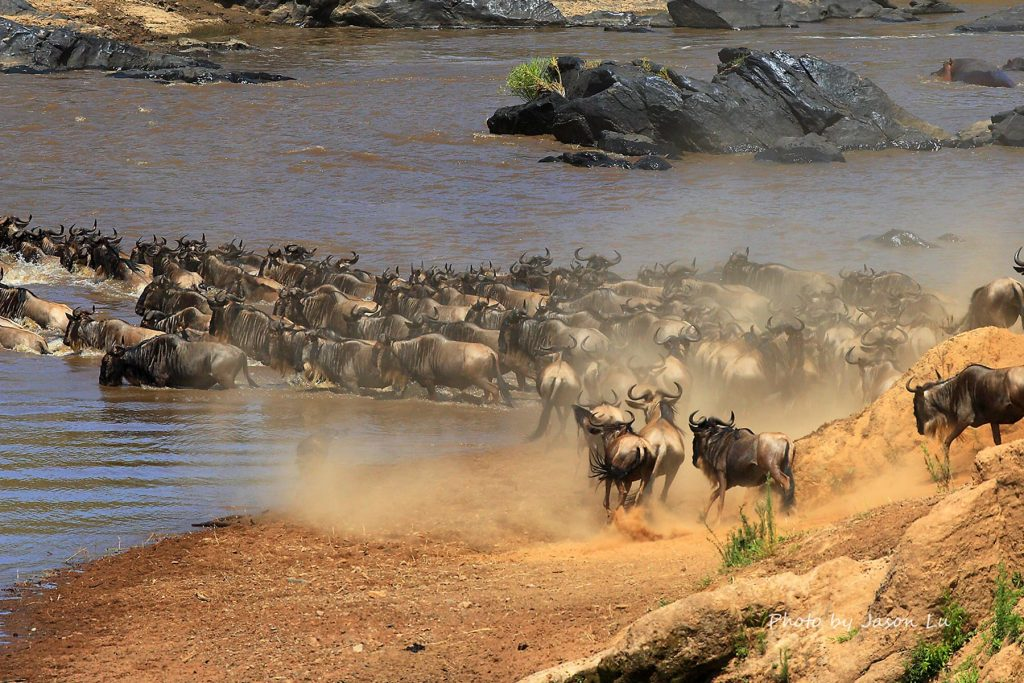 widlebeest migration is reason to visit Kenya