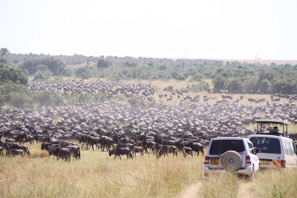 Best time to visit kenya - the migration